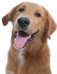 Suburban Pets - Long Island Pet Sitters - dog4